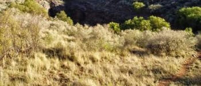 Boesmansgat